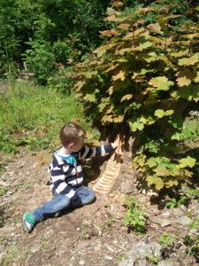Child on Woodland Walk