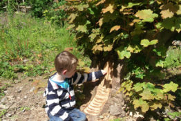 Children's Activity – Making Fairy Dens