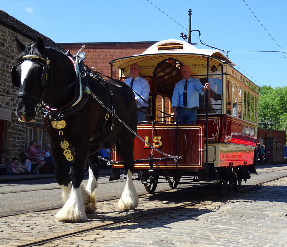 Horse Tram + driver in shirt