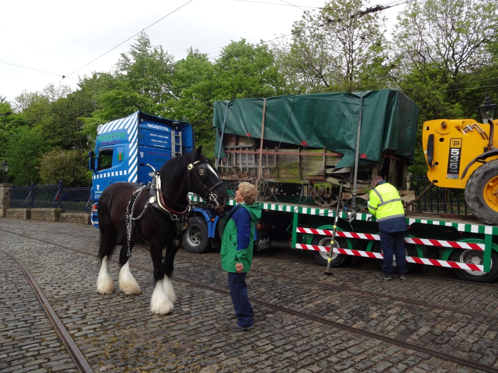 Joseph the horse inspecting the new tram arrival