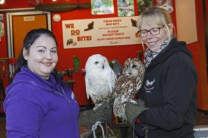Owls at Woodies Wings